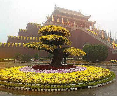 Le chryzanth me plante porte bonheur au japon - Plante d interieur porte bonheur ...